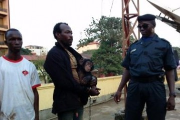 Guinée : deux présumés braconniers interpellés par Interpol