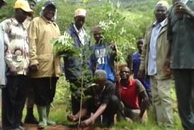 Dabola:La Filière bois relève les manches contre la dégradation du couvert végétal