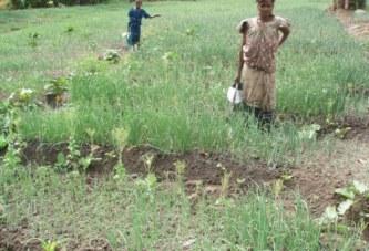 Conakry : les bas-fonds occupés par des paysans, mais jusqu'à quand ?