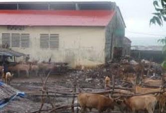 Abattoir de Coléah : Les occupants déguerpis, pas de viande depuis 4 jours